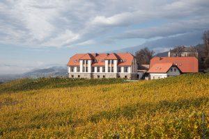Blick auf das Weingut Taggenbrunn