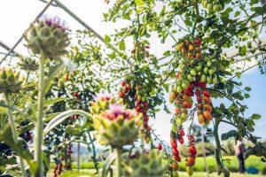 Bio-Gemüse | Taufrisch GmbH